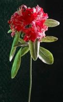 fleur02
